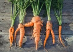 Этого вы про морковь не знали
