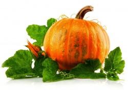 Как вырастить 50-килограммовую тыкву