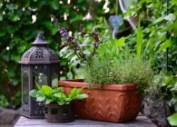 Растения-защитники – на страже урожая