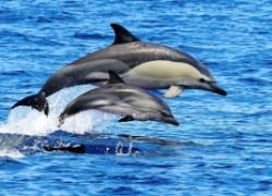 Интересные и необычные факты о дельфинах
