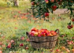 Почему в саду может не быть плодов