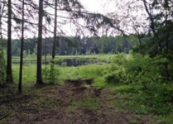 Непознанные тайны леса: как выйти, если заблудился