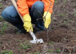 Ошибки садоводов: как быстрее их исправить