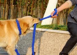 Собачьи зоотовары, которым больше рады прохожие, чем собаководы