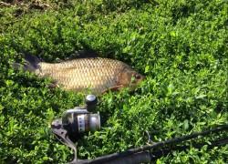 Как Серега рыбу нашел
