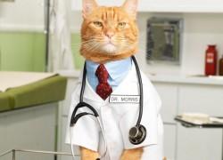 Кошка в доме: персональный диагност
