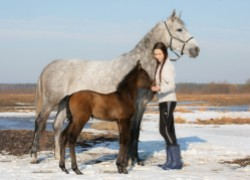 Разведение лошадей: занятие не для ленивых