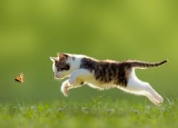 Кошка ловит насекомых. Хорошо это или плохо?