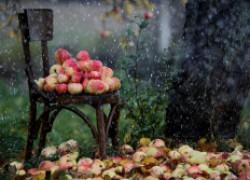 Прошли дожди – урожая не жди