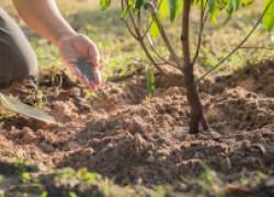 Что влияет на качество плодов