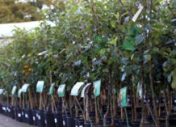 Осень: зеленая лихорадка начинается