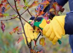 Не спешите обрезать деревья и кустарники