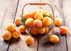Особенности некоторых сортов абрикосов