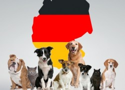 О домашних животных в Германии