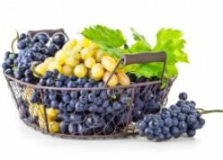 Немного про болезни винограда