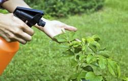 Как замедлить фитофтору и спасти свои помидоры