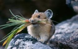 Защищаю свой сад от мышей при помощи специального средства
