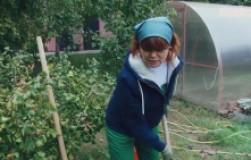 Как огородники сами заражают грядки фитофторозом и как спасти землю