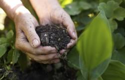 Удобрения, которые обязательно нужно внести осенью