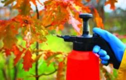 Осенние опрыскивания сада от болезней и вредителей