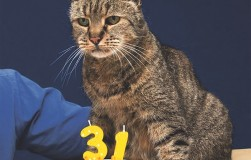 Кот отмечает 31-ю годовщину!