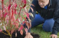 Как пересадить кустарники осенью
