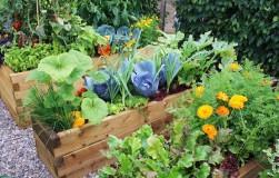 Растения-спутники – полезное соседство овощей