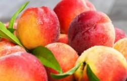 Выращивание персика в северных широтах