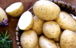 Не уродился картофель – что делать с этой бедой?