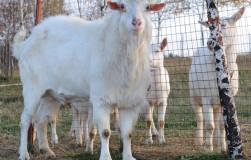 Булатово: уникальная ферма с инновационным оборудованием