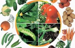Как увеличить урожай без затрат