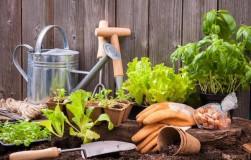 Садовые хитрости и дачные тонкости