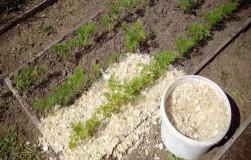 Опилки в огороде – польза или вред