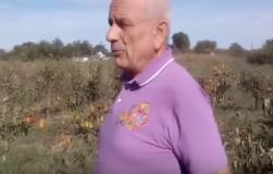 Житель Ростовской области изобрел уникальное средство, избавляющее от садовых вредителей