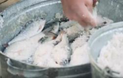 Вобла вяленая по-астрахански. Как засолить рыбу. Супер рецепт от Олега Пахолкова
