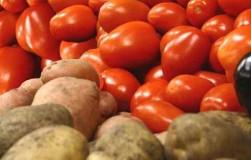 Самые плодовитые сорта картофеля и помидоров