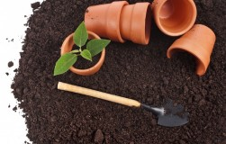 Какие семена покупать: в драже или в лентах?