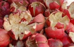 Корки от граната — бесценное лекарство от грибных болезней в моем саду