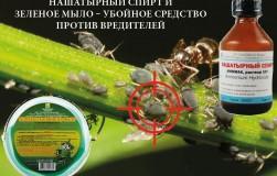 Нашатырный спирт и зеленое мыло – убойное средство против вредителей