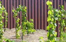 Система удобрений винограда