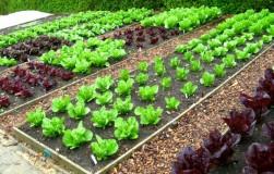 Табак на страже урожая