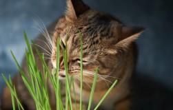 А вы знали, что пырей — целебный сорняк?