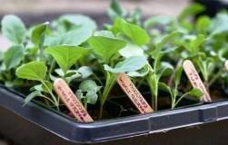 Бирки и этикетки для маркировки растений