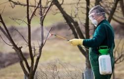 Надо ли опрыскивать сад и виноградник осенью?