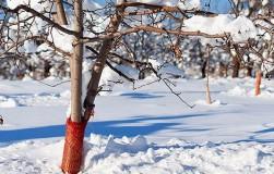 Спасаем растения от морозов
