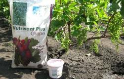 Как вылечить уставшую почву