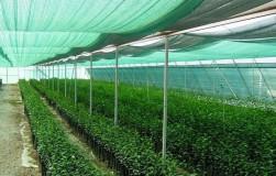 Как защитить рассаду от солнечных ожогов