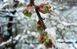 Заморозки в саду: предупрежден − значит вооружен