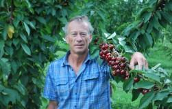 Топ-5 лучших сортов вишни