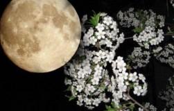 Лунно-посевной календарь садовода-огородника на май 2018 года